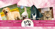 CAT AND DOG SITTIN