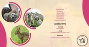 SMALL ANIMALS / FISH SITTING