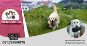Pet Sitters,  Dog Walking Godalming