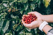 Online Fresh Roasted Coffee Supplier in UK - Redber!